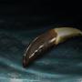 File:Sharp Wolf Teeth.png