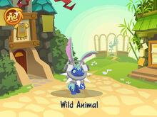 AnimalJam 9