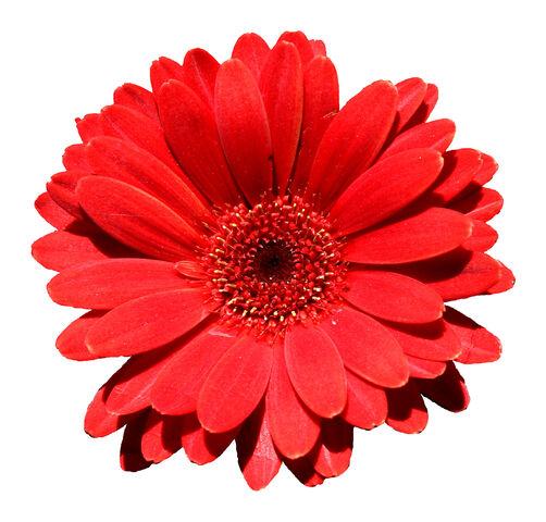 File:Flower symbol example.jpg