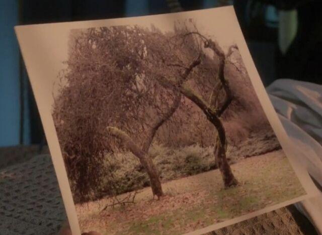 File:1x06 trees.jpg