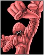 Octoman-IV