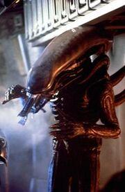 Alien (1979) - The Alien