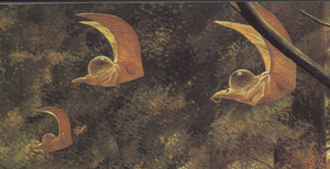 Hook-tailed Flyers