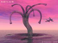 Solaris-Agilus