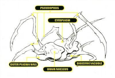 Spikes-biology