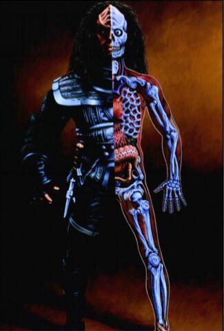 File:Klingon anatomy small.jpg