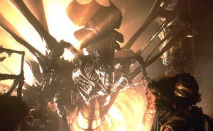 Xenomorph Alien Species Fandom Powered By Wikia