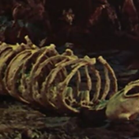 Skeletal remains of a mooncalf, seen in the 1964 movie