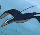 Blue Floater