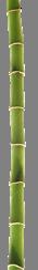 Bamboo Drop