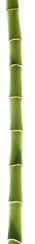 File:Bamboo Drop.png