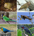 Parrot montage.png