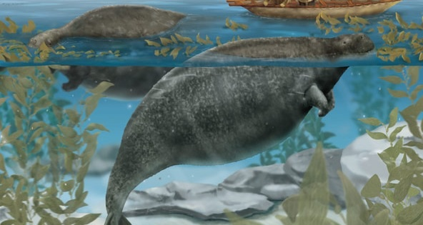 File:Sea Cowr.jpg
