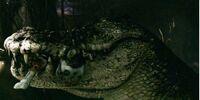 Rogue Crocodile