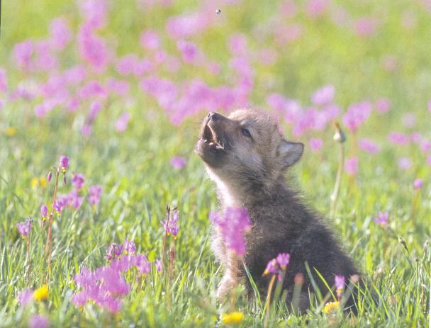 File:Adorable little pup.jpg
