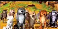 Wolf Social standings