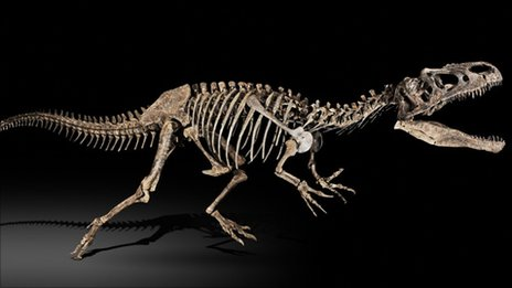 File:49294359 allosaurus 3.jpg
