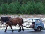 Horse car2