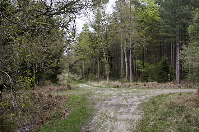 File:AVAR Maastricht wood.jpg