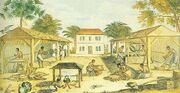 Tobacco cultivation (Virginia, ca. 1670)