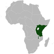 Zanzibar Africa NW