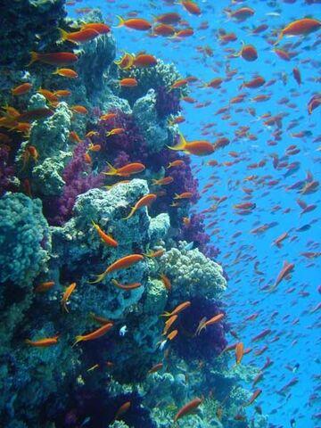 File:Great Barrier Reef.jpg