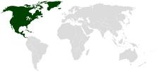 United States of America (Orinetal Napoleon)