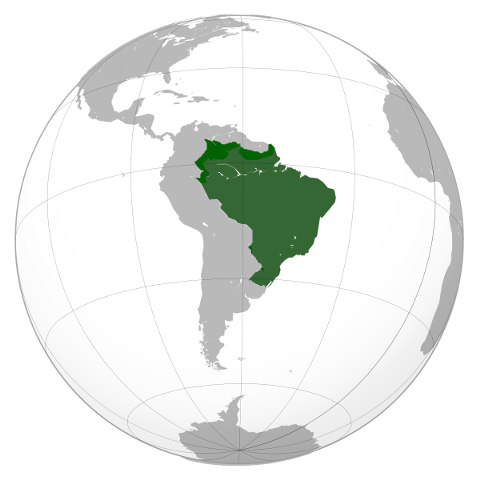 File:Republic of Brazil (The Purple Mantle).png