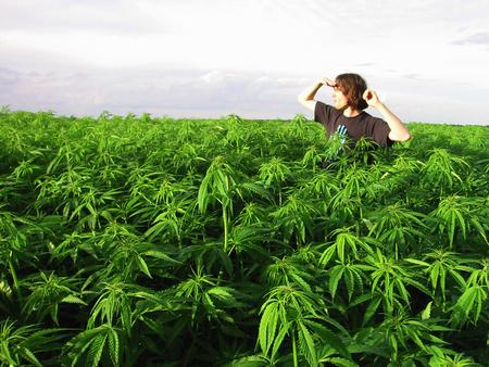 File:Weed Field.jpg
