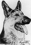 Hitler's Dog Blondi