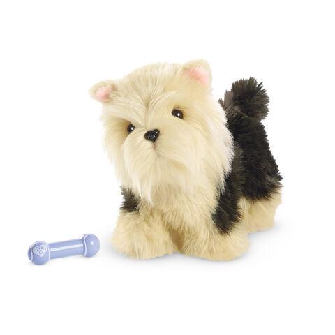 File:TerrierPuppy2015.jpg