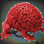 Brain frog