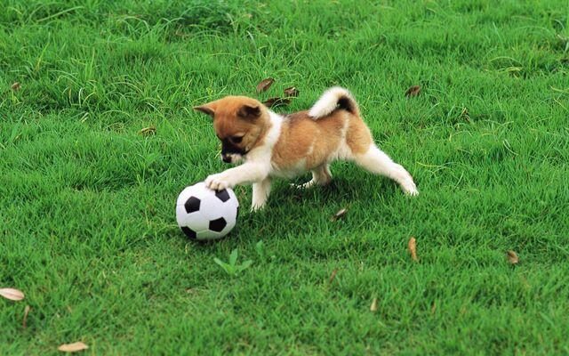 File:Pretty-Dogs-in-Garden-dogs-13905929-1920-1200.jpg