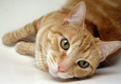 File:Choosing pet names animal communicator wild insights.jpg