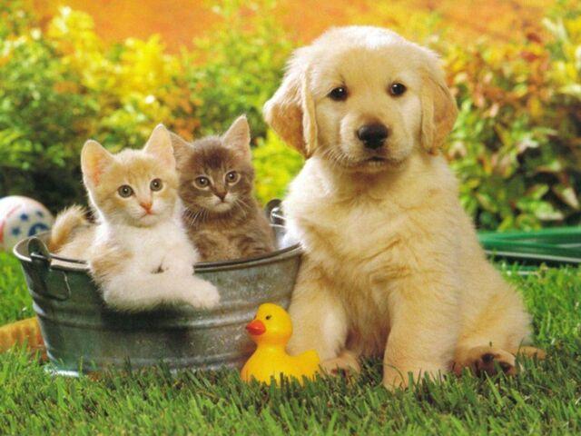 File:Dog 002N.jpg