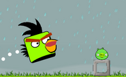 Angry Birds Boxing Bird In Action