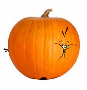 Pumpkin-bird