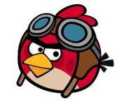 Pilot Bird