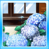 Hydrangeas By Window Type 2