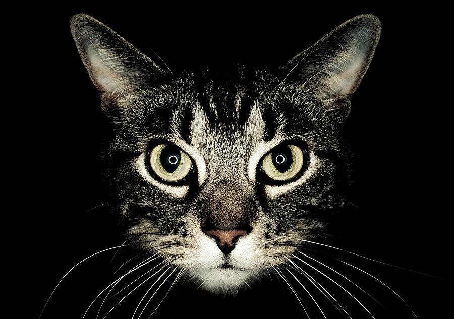 Cat Eyes That Print