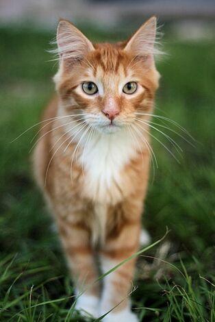 L-A-cat-in-grass-is-a-tiger-in-the-jungle