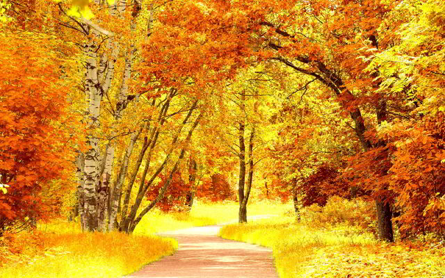File:Red-yellow-autumn-scenery.jpg