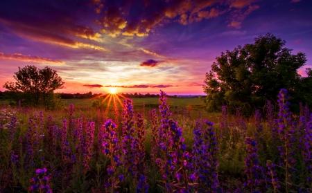 File:FloweredMeadows.jpg