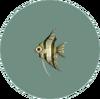 Angelfish (City Folk)
