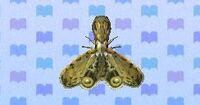 Lantern fly encyclopedia (New Leaf)