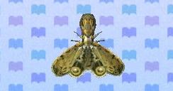 File:Lantern fly encyclopedia (New Leaf).jpg