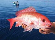 LOOK its a Red Snapper OMG NOWAI