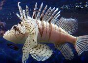 Lunalionfish