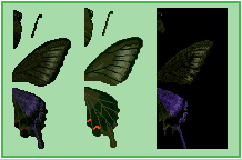 File:Peacock Butterfly (City Folk texture design).png