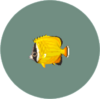 Butterflyfish2